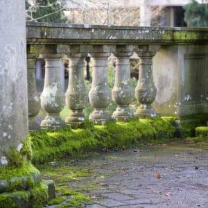 Moss on stone work