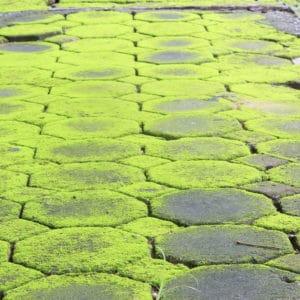 Moss on stone tiles