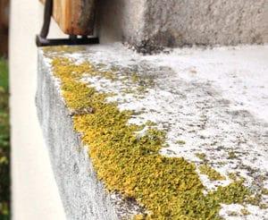 Lichen on window sill