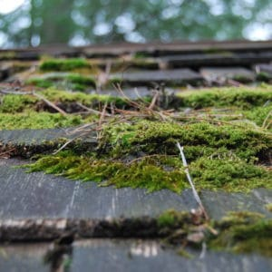 moss-covered-roof-pt2-m