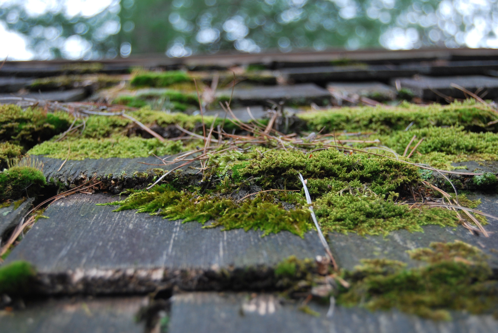Moss Algae Amp Lichen Removal Atm 007 Owatrol Direct