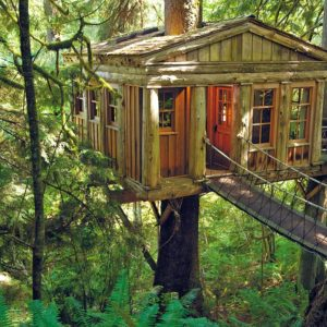 How to weatherproof your tree house - a tree house in a forest