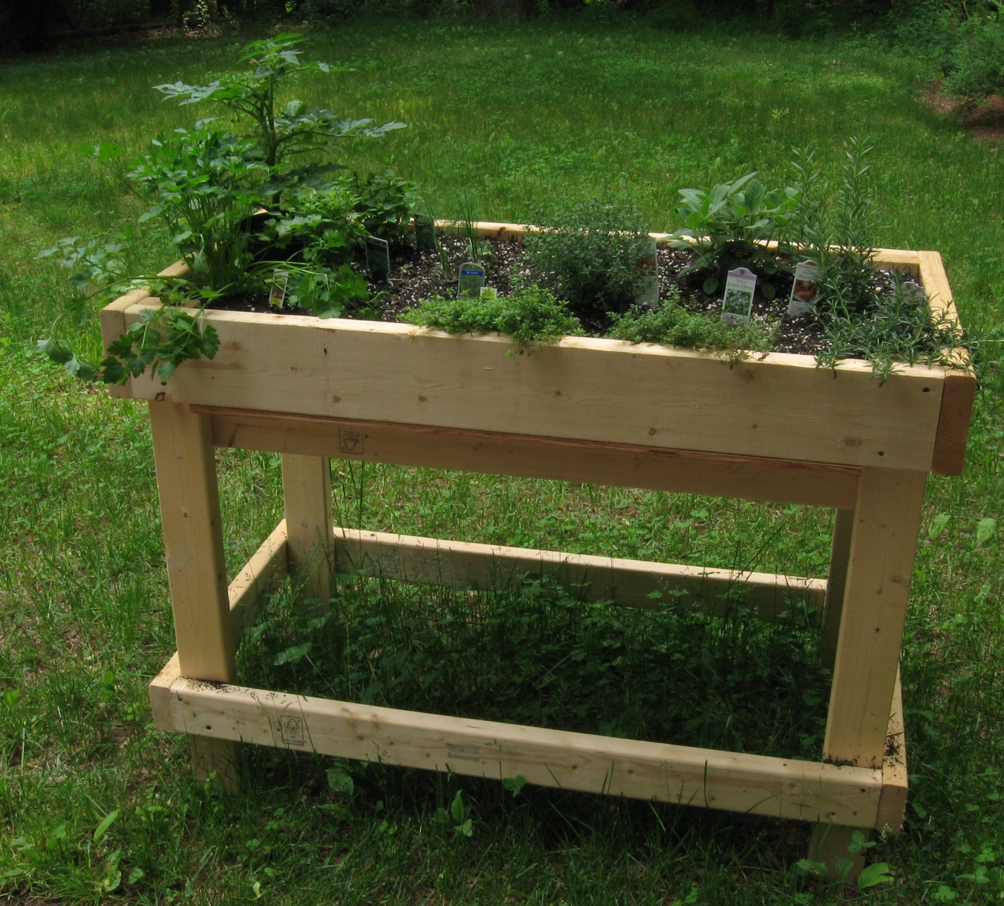 Wooden raised bed with herbs growing inside it