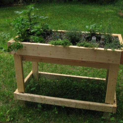Raised garden bed with herbs growing in it